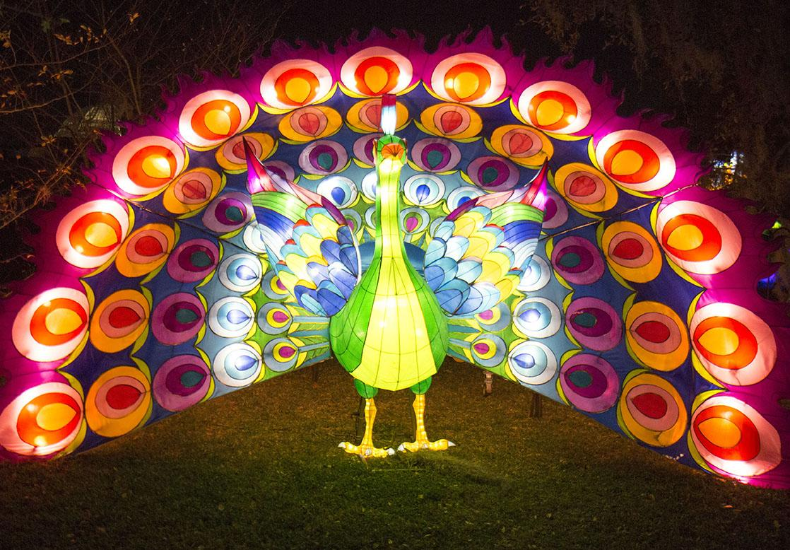 The Peacock in the Peacocks and Birds display was one of 30 light displays at the Chinese Lights exhibit in City Park's Botanical Gardens. The Chinese Lights exhibit will be on display from February 23 to May 1.
