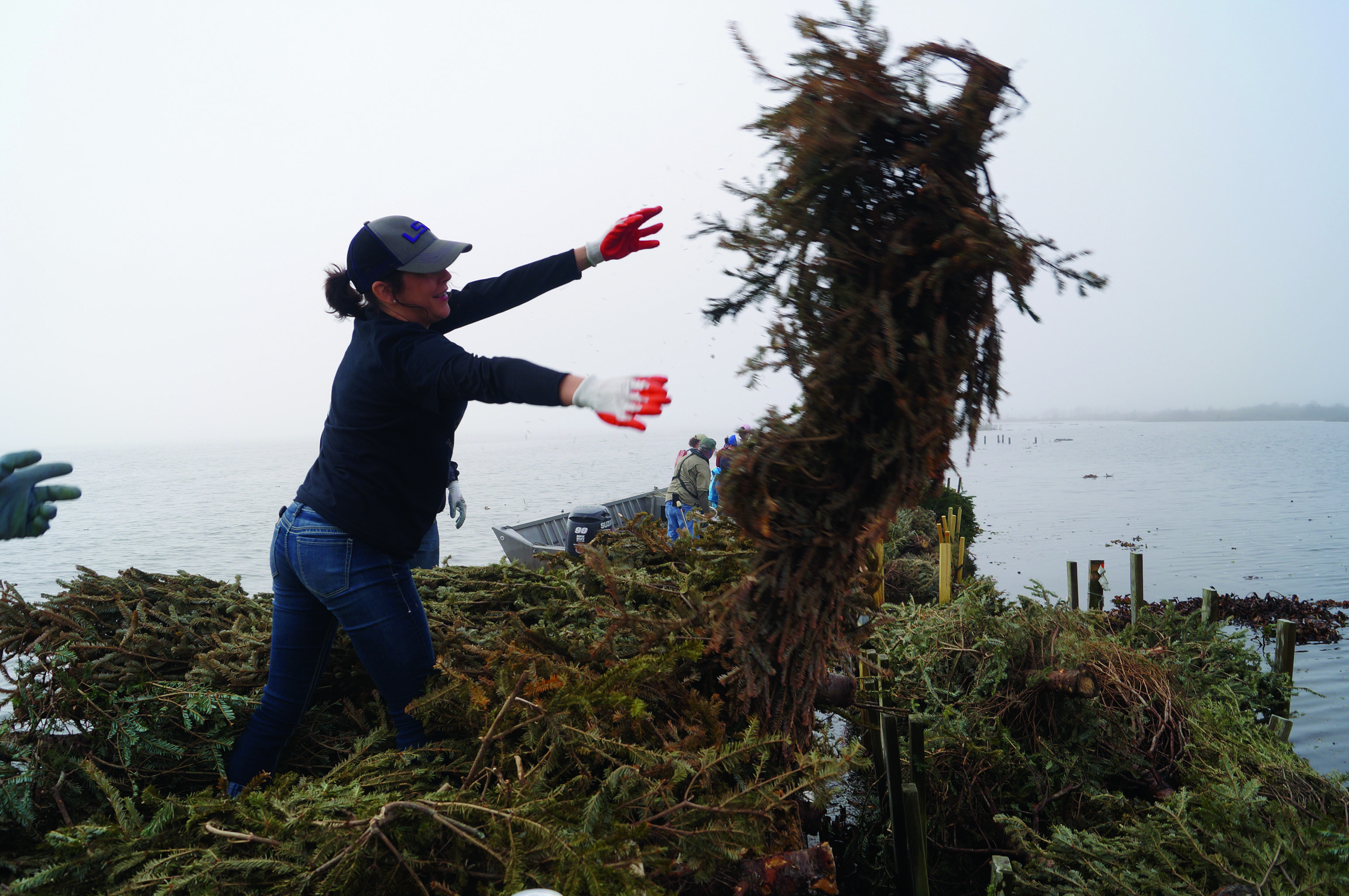 Christmas trees stop coastal erosion in Jefferson Parish