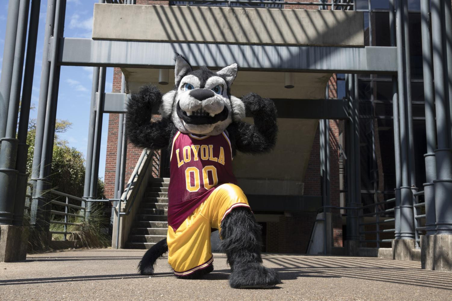 Havoc the Wolf has served as Loyola's mascot since 2006 after a re-branding by the Loyola New Orleans Athletic department. Loyola has featured a wolf mascot, either live and costumed student, since 1928. Photo credit: Cristian Orellana