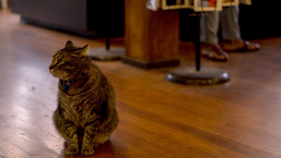 WEB_CAT.jpg