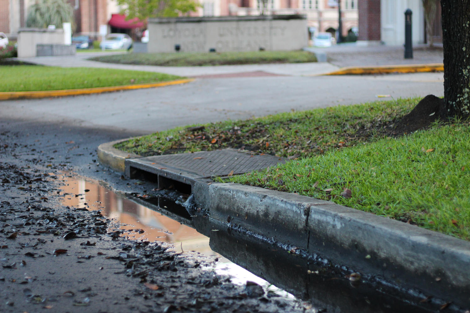 A catch basin on St. Charles Ave. near campus sits next to still water. Mayor Cantrell looks to New Orleans communities to help clean the catch basins. Photo credit: Cristian Orellana