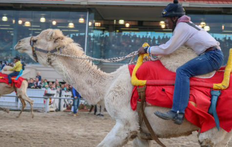 Fair grounds goes wild with camels, zebras and ostriches