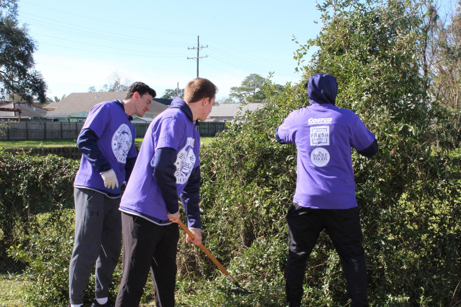 A group of University of New Orleans baseball players helps out thr local community by cutting pieces off an overgrown bush. HANNAH RENTON / The Maroon.