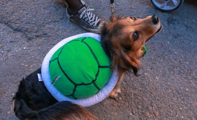 This+dog+is+decorated+in+a+turtle+costume.