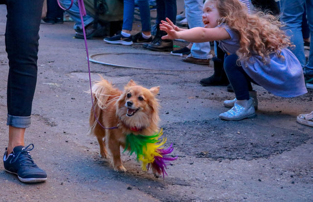 A+young+girl+reaches+for+all+the+dogs+as+one+star+in+a+feather+boa+struts+down+the+parade+rout