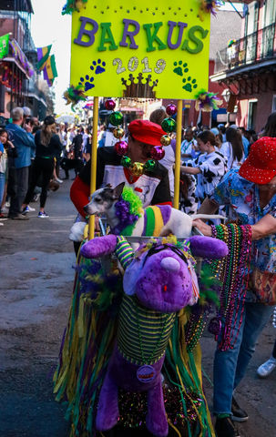 The+owners+of+these+dogs+throw+beads+to+the+parade+goers.