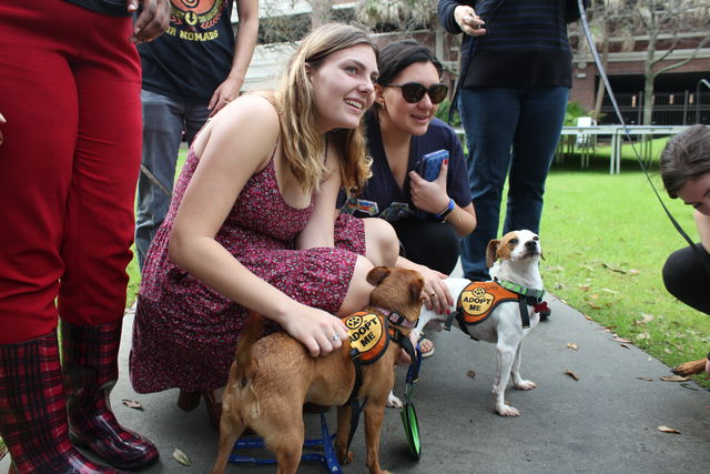 Three+Loyola+students+pet+one+of+the+dogs+from+Zeus%27s+Rescues.The+Bateman+team+hopes+that+the+Dogs+for+Diversity+event+will+help+draw+people+to+their+future+events.