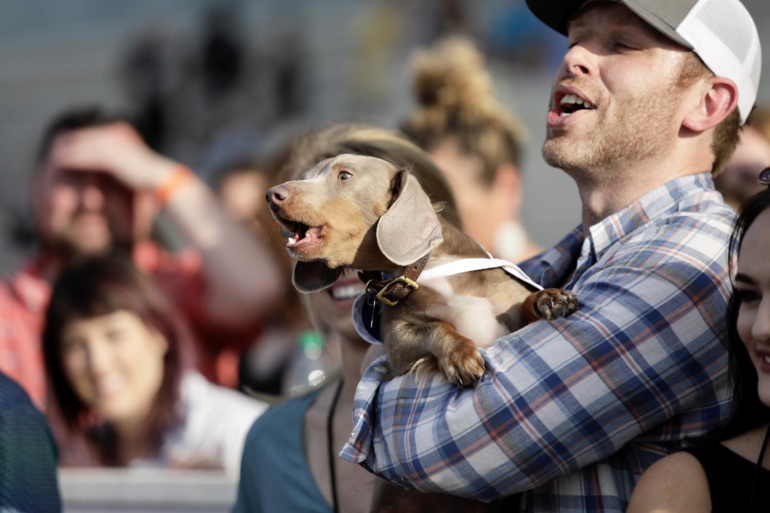 Douie and his owner, John Detrinis, celebrate their win at the Wiener Dog Races. Dentrinis used fried chicken to help lure Douie to the finish line.