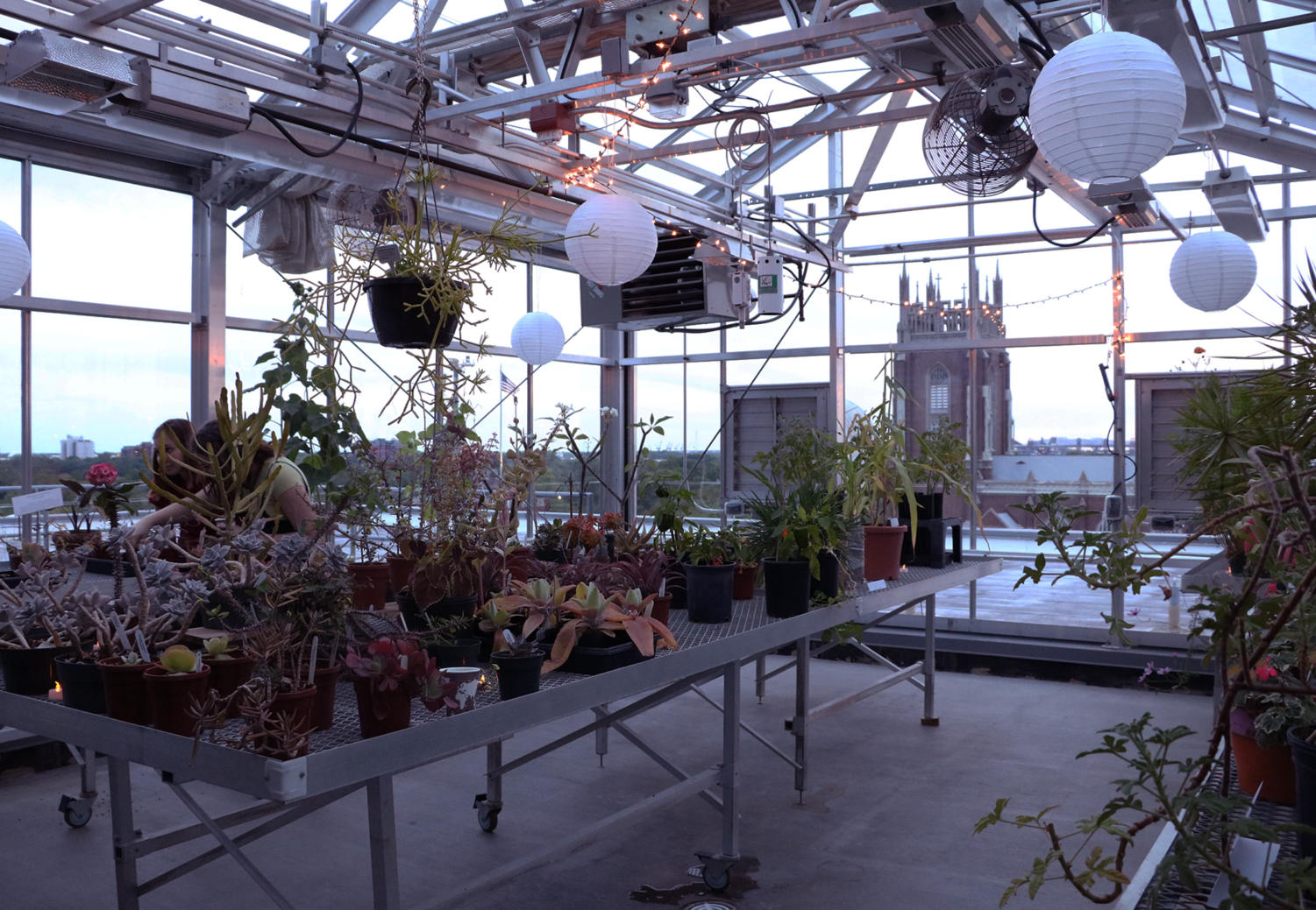 The greenhouse located on the roof of Monroe Hall sits lit with fairy lights on April 23. Photo credit: Hannah Renton