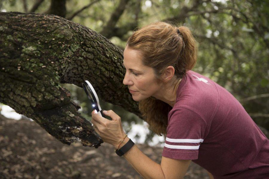 Opinion: Loyola's Environmental Program helps conserve local environment