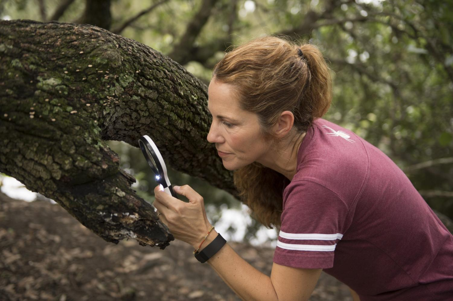 Aimee Thomas looks at organisms on a tree in Audubon Park. Thomas urges students to get to know the enviornment that surrounds them. Courtesy of Kyle Encar